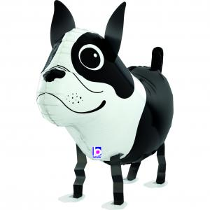 Balloon Friends - Boston Terrier 48 cm